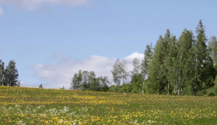 Swedish summer meadow on Vimeo